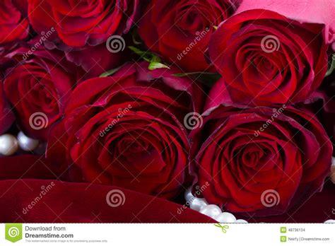 Imagenes De Rosas Terciopelo | rosas rojas en el terciopelo foto de archivo imagen