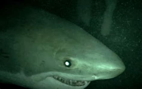 Open Water sharks attack in open water 3 cage dive trailer bloody