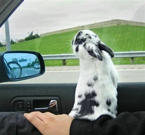 Some On The Go With The Rabbit Travel Vibe by Some Rabbits Like To Travel But Some Don T Some Flip Out