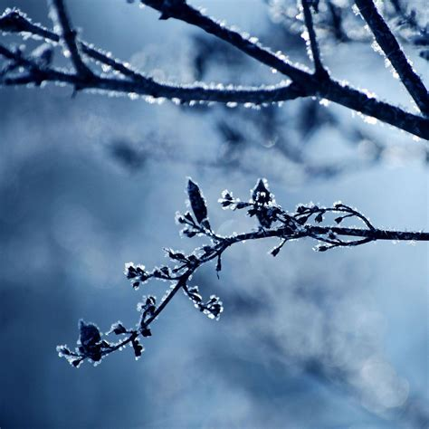 Winter Themed Backgrounds Wallpaper Cave Winter Themed Backgrounds