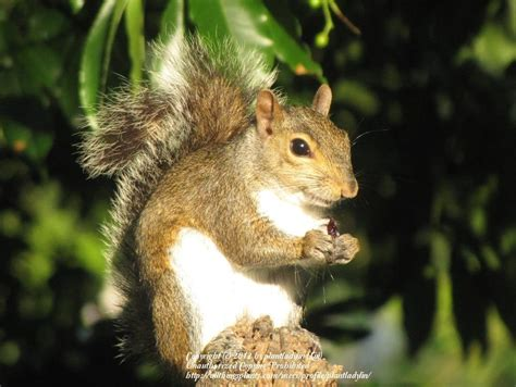 Keeping Squirrels Out Of Garden by Keep Squirrels Out Of Feeders Garden Org