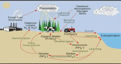 Nitrogen Cycle Worksheet by Nitrogen Cycle Worksheet Www Pixshark Images