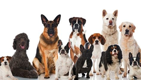 most common breeds 30 most popular breeds that are all the world top tips