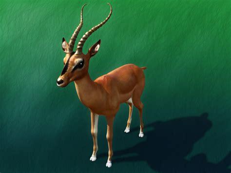 impala deer impala deer max