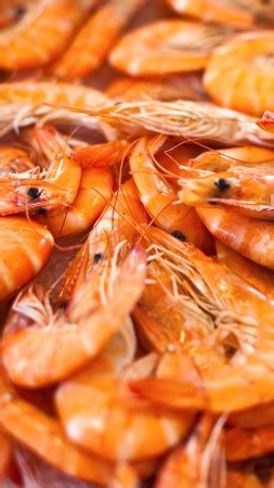 wallpaper seafood soup, shrimp, tomato sauce, greens