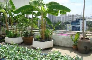 kitchen gardening ideas start a refreshing rooftop kitchen garden