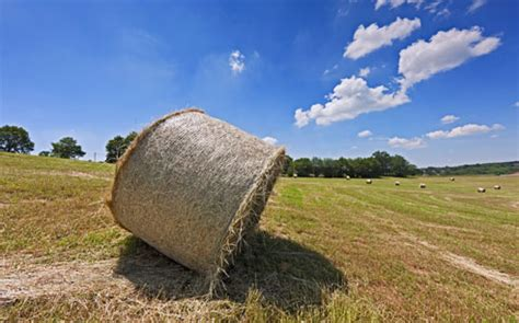 commissione agricoltura no alla tassa sul lavoro della terra franco bordo