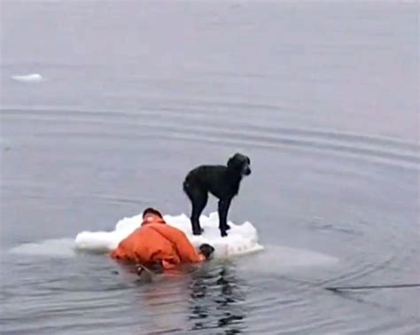 dogs in danger compassionate humans helping dogs in danger