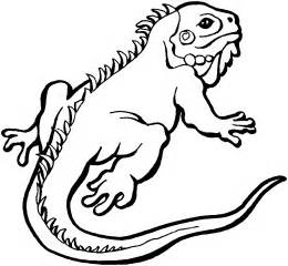 iguana coloring page free lizard coloring pages