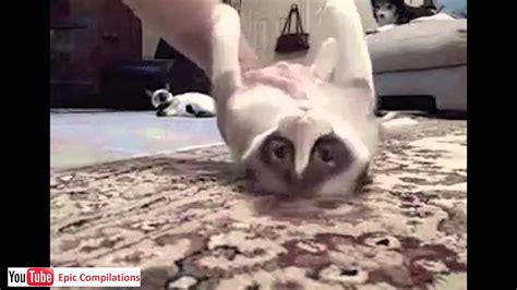 epic funny cats cute cats compilation  minutes hd