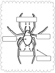 printable zoology worksheets spider parts worksheet google search education
