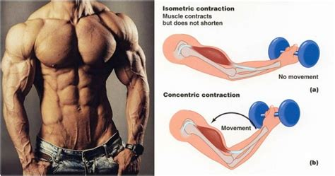 isometric contraction method fitness workouts exercises