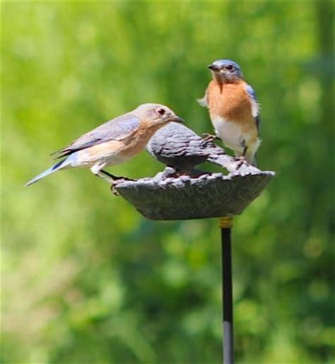 wild birds unlimited june 2013