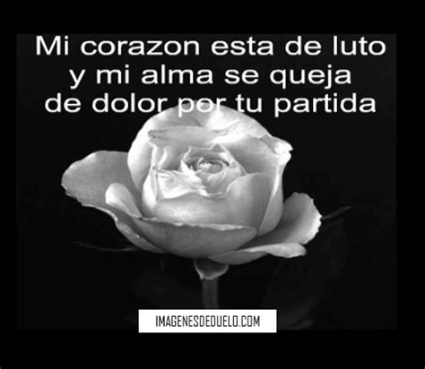 imagenes de rosas negras para whatsapp im 225 genes de luto con rosas blancas flores hermosas con