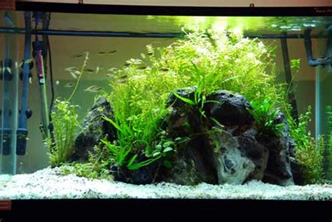 Aquascaping Tips by A Guide To Aquascaping The Planted Aquarium