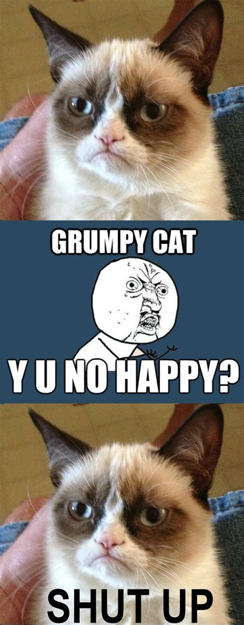 No Meme Grumpy Cat - 17 best images about y u no on pinterest texts no text