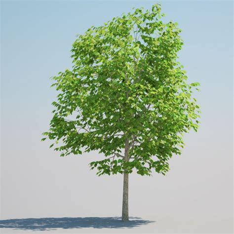 3dtreexchange 187 deciduous trees