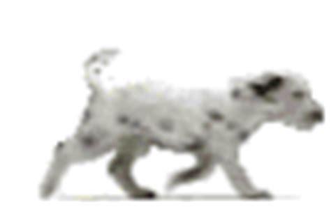 haus gif haus mauken urlaub f 252 r mensch und hund at haus mauken