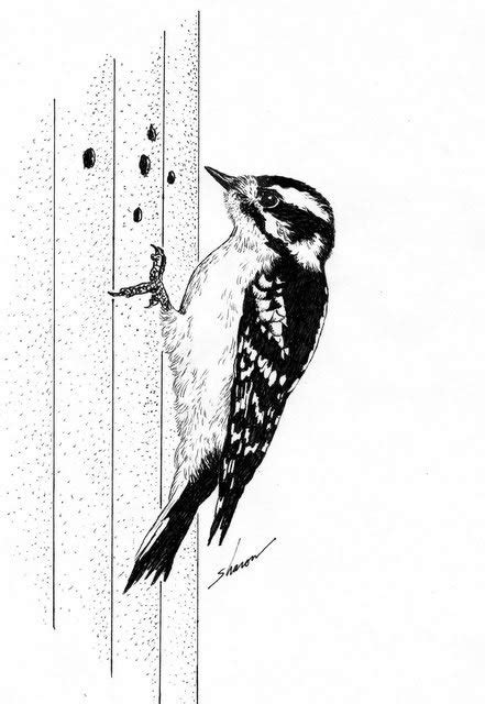woodpecker on side of house woodpecker on side of house 28 images how to attract pileated woodpeckers with