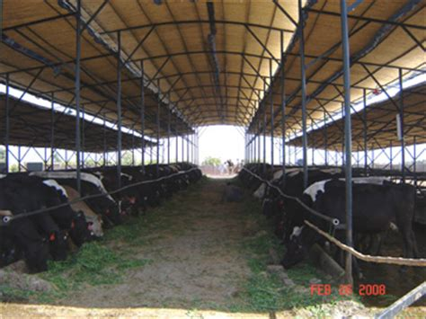 Shed Design For Dairy Farm by Pak Dairy Info Sairy Shed Designs