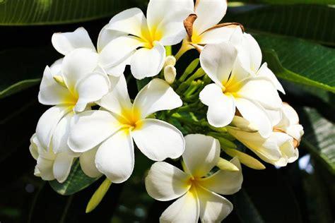 la flora sumba indonesia