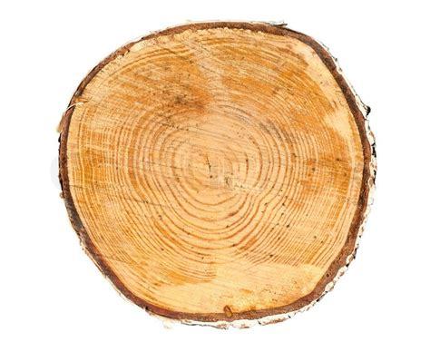 wood cross section cross section of tree trunk stock photo colourbox