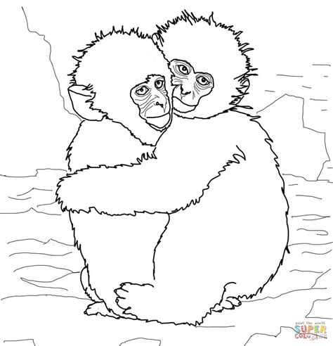 Rhesus Monkey Coloring Page | rhesus macaque coloring download rhesus macaque coloring