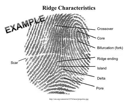 fingerprints and other ridge skin impressions second edition international forensic science and investigation books fingerprints 6enders