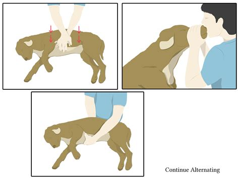 cpr on a how to perform cpr on a 13 steps with pictures wikihow