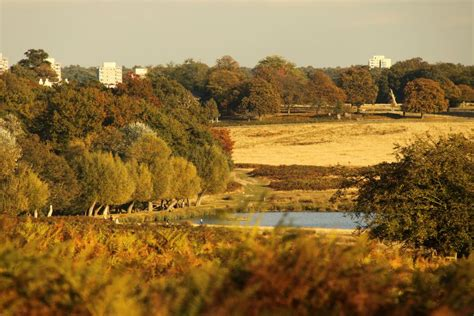 richmond park which are the best parks in on aboutbritain
