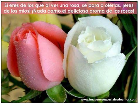 imagenes con rosas y frases bonitas im 225 genes flores de rosas bonitas con frases imagenes