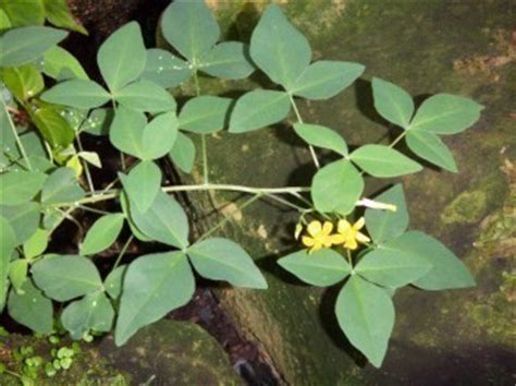 imagenes extrañas y curiosas plantas y flores curiosas pgina 6 foro de infojardn