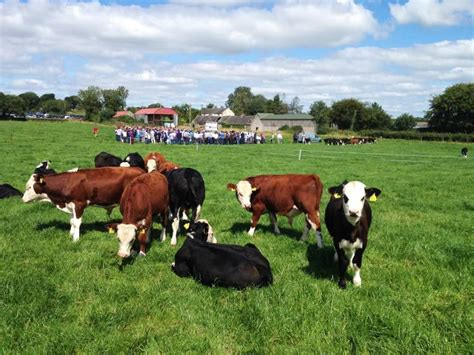 markets to cope with increased cattle numbers 20 august