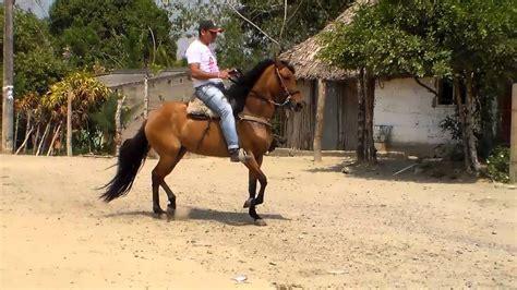 caballo de la sabana youtube maddona de he paso fino colombiano en venta rey de la