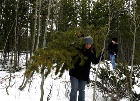 christmas tree permits kamas utah tree permits go on sale the salt lake tribune