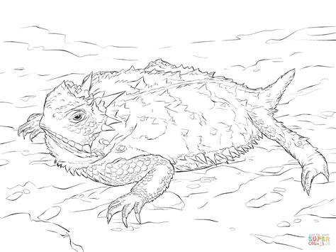realistic lizard coloring pages realistic texas horned lizard coloring page free