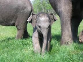 baby elephant wild life adventures
