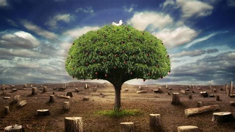 wallpaper hd nature 3d nature tree nature 3d pictures hd wallpapers nature