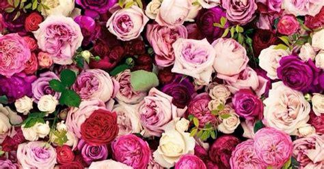 Katee Spadee Flower kate spade roses wallpaper flowers