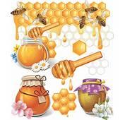 Honey Bee Vector Design Elements  Food Free Download