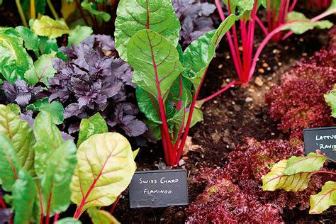 6 Ways To Prepare Garden Beds For Winter Vegetables Preparing Vegetable Garden For Winter