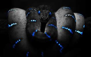 beautiful snake wallpaper hd images one hd wallpaper pictures backgrounds free download