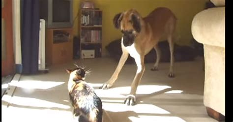 puppy and not getting along cats and dogs do not get along but these two were never told omg i my