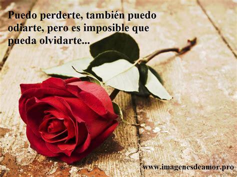 imágenes rosas frases 5 imagenes de hermosas rosas con frases cortas