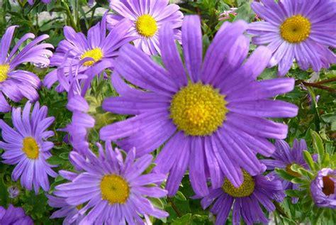 fiori in la finestra di stefania i fiori pi 249 belli per il mio