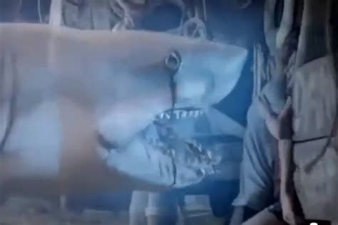 film ghost shark ghost shark wins inevitable sharknado comparisons after