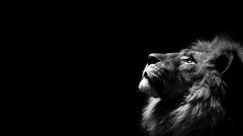 wallpaper desktop black and white lion black and white wallpaper photos 2092 hd wallpaper site