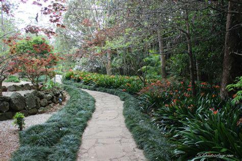 Mt Tamborine Botanical Gardens In My Backyard Tamborine Mountain