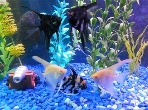 fish decorations for home setting up an aquarium for children 24 7