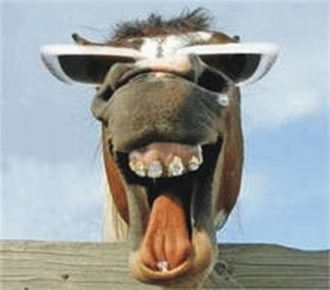 mujer tiene sexo con un burro youtube donkey laughing www pixshark com images galleries with